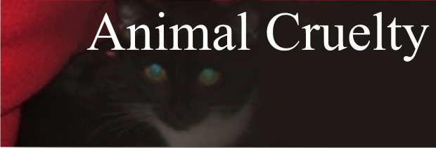 No arrest made in skinned cat case in Murfreesboro | skinned cat, cat, animal cruelty, animal, Pine Court, Pine, Murfreesboro news, WGNS news, WGNS, Eagle Street, Murfreesboro PAWS