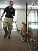 Nearby schools in Manchester outsourcing K9 searches at schools