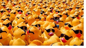 Quackers Invade LANES, TRAINS AND AUTOMOBILES Noon-1PM Saturday | Duck Derby, quackers invade Lanes Trains and Automobiles, CAC, WGNS