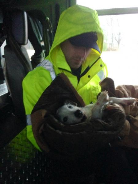 POSITIVE: Murfreesboro Fire and Rescue Saves Jack Russell Terrier in Motor Vehicle Accident  | dog, Jack Russell, Murfreesboro news, Murfreesboro fire, Ashley Mcdonald