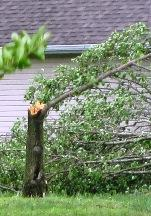High Winds Downed Trees In Walter Hill Area