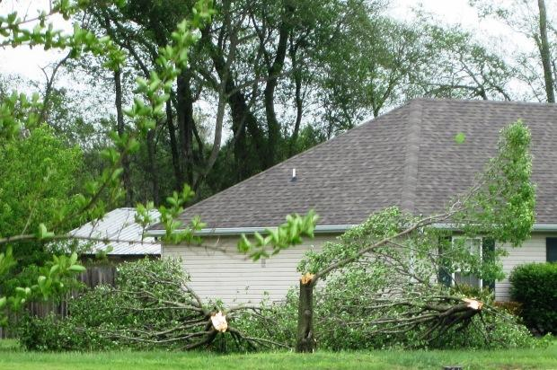 High Winds Downed Trees In Walter Hill Area | storms, 1:00PM, Sunday, April 27, 2014, Walter Hill area, WGNS