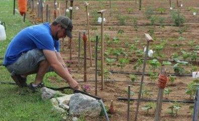 RCSO Garden of Hope Growing | garden, Rutherford County Sheriff's Office, WGNS News, WGNS, Murfreesboro news
