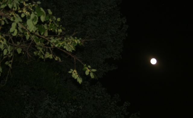Is That A Street Lamp? No--It's A SUPER MOON!