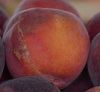 Peach, plum and nectarine recall due to Listeria monocytogenes