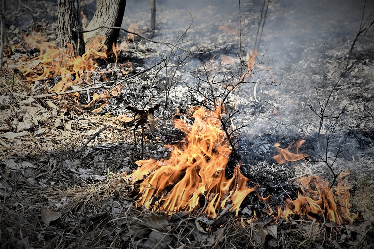 TN Forestry Creating FIRE STRIKE TEAM