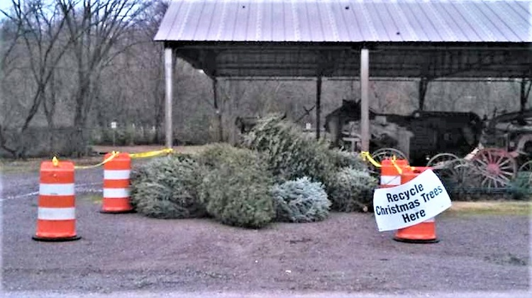 Re-Cycle Your Christmas Tree