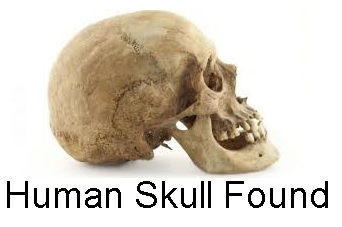 Skull Found In Rural SE Part of County | southeastern area of Rutherford County, dog took to owner, skull, RCSO, WGNS