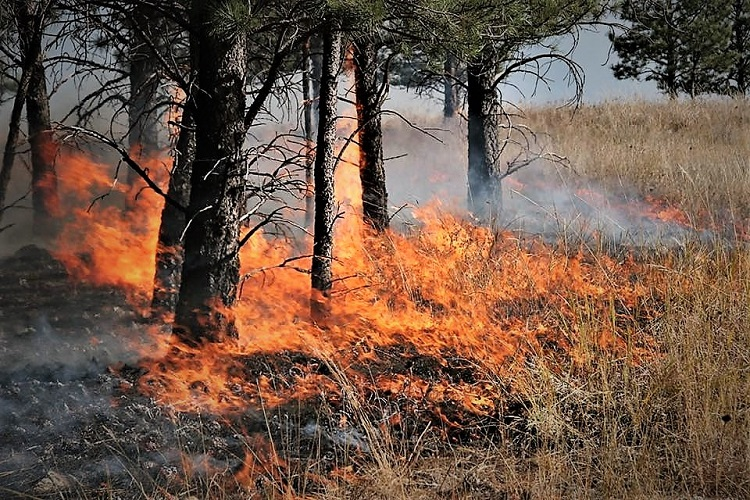 Prescribed Burns at Stones River Starting Monday