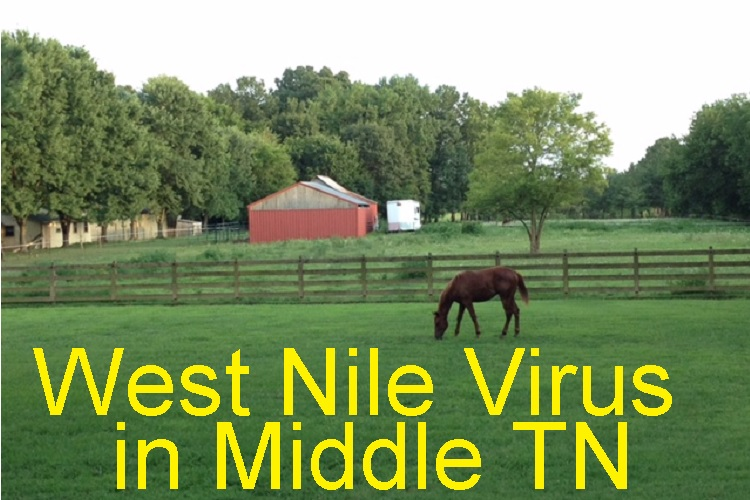 Middle TN Horse Dies of W. Nile Virus