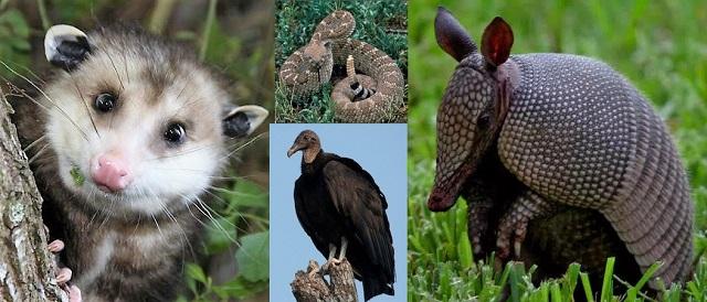 Bats, Vultures, Armadillos--Oh No!