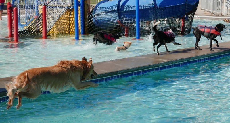 Pups Loved Saturday's Plunge At 'Boro Beach