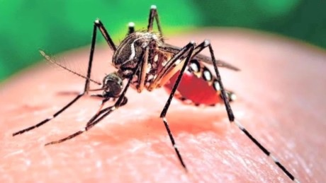 Zika Virus Case Discovered In Rutherford County