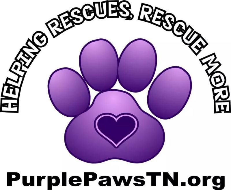 Purple Paws Hosting Dog Wedding