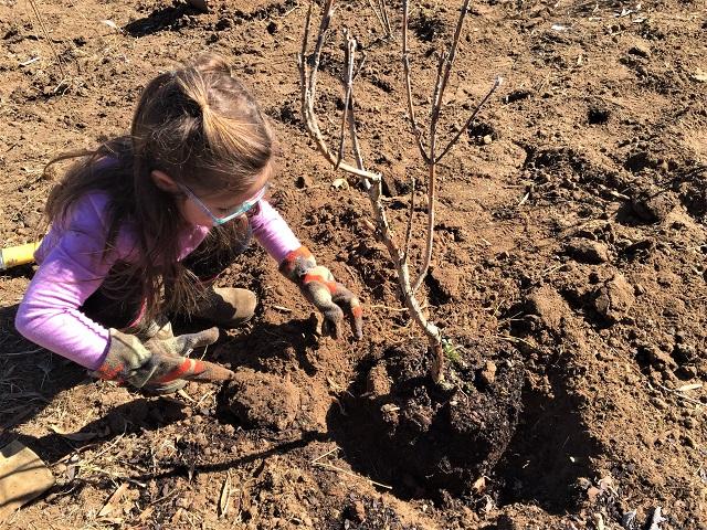 Murfreesboro Rotary Improving Eco System