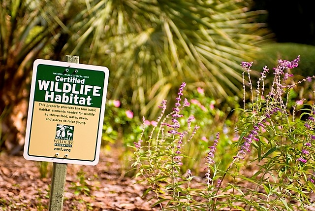 Certified Backyard Habitat wildscaping your yard--for you and wild animals. - murfreesboro news